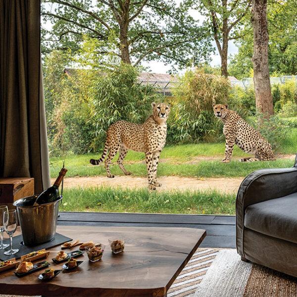 photo-cheetah1-650px